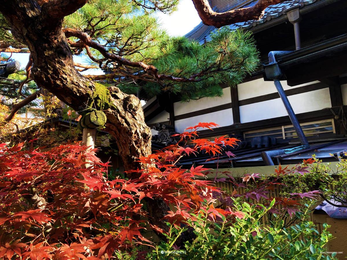 善光寺 紅葉する宿坊の庭