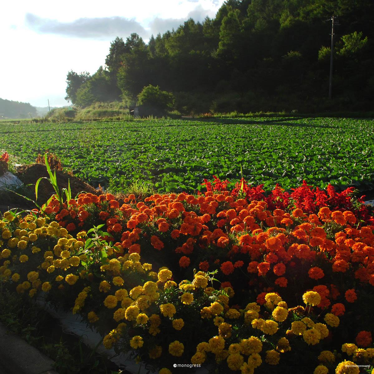 長野ドライブ 川上村
