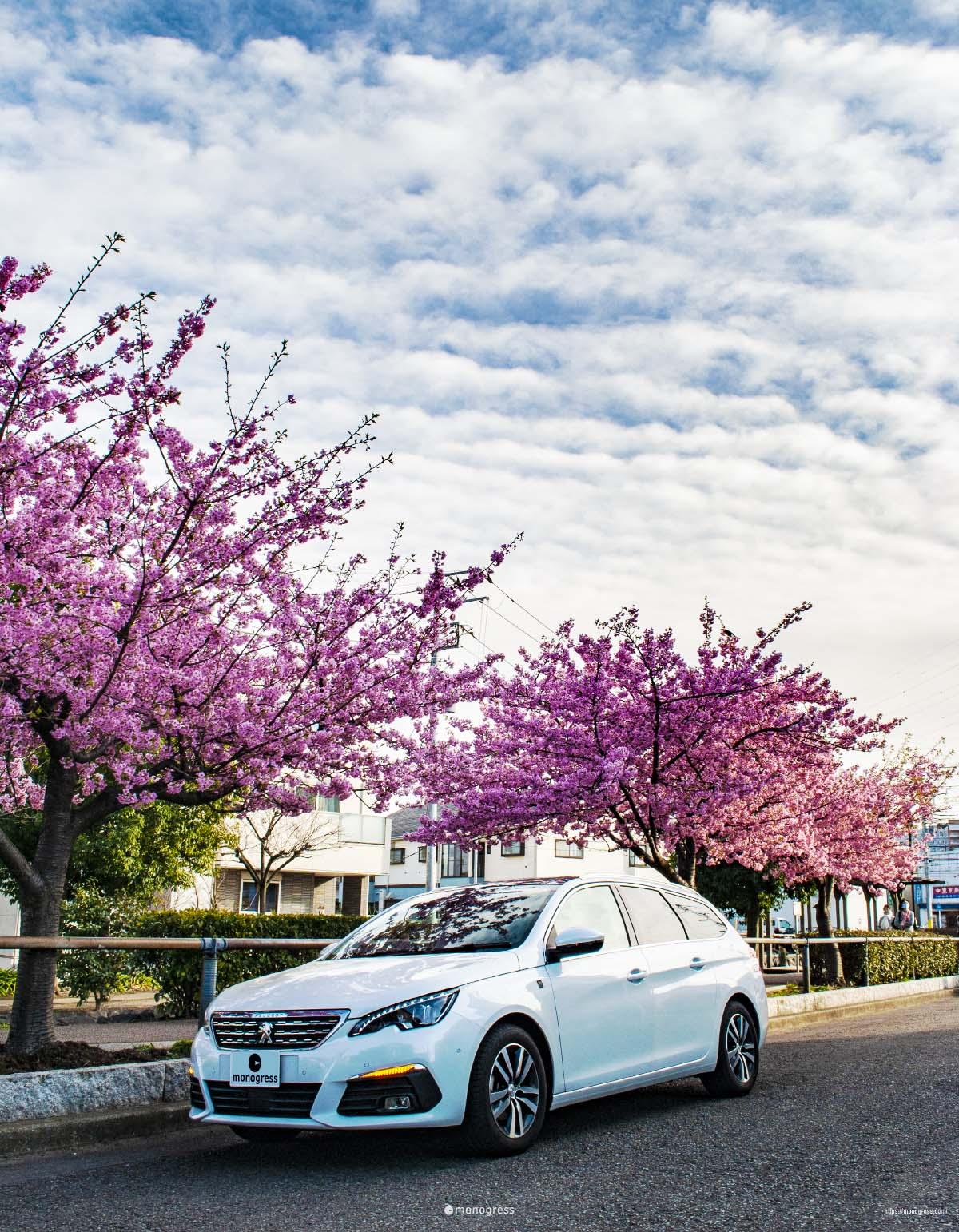 プジョー308SWと桜