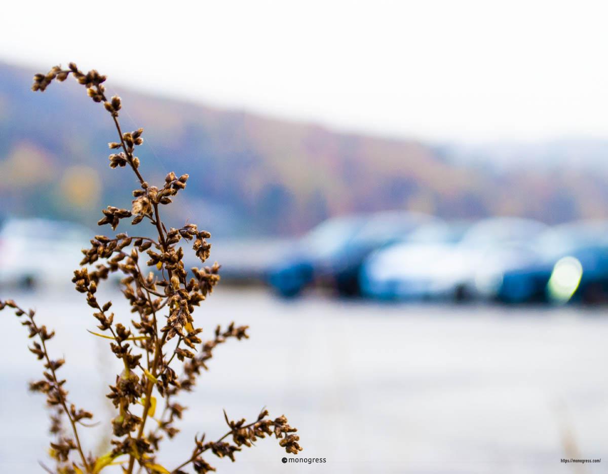 野尻湖とプジョー
