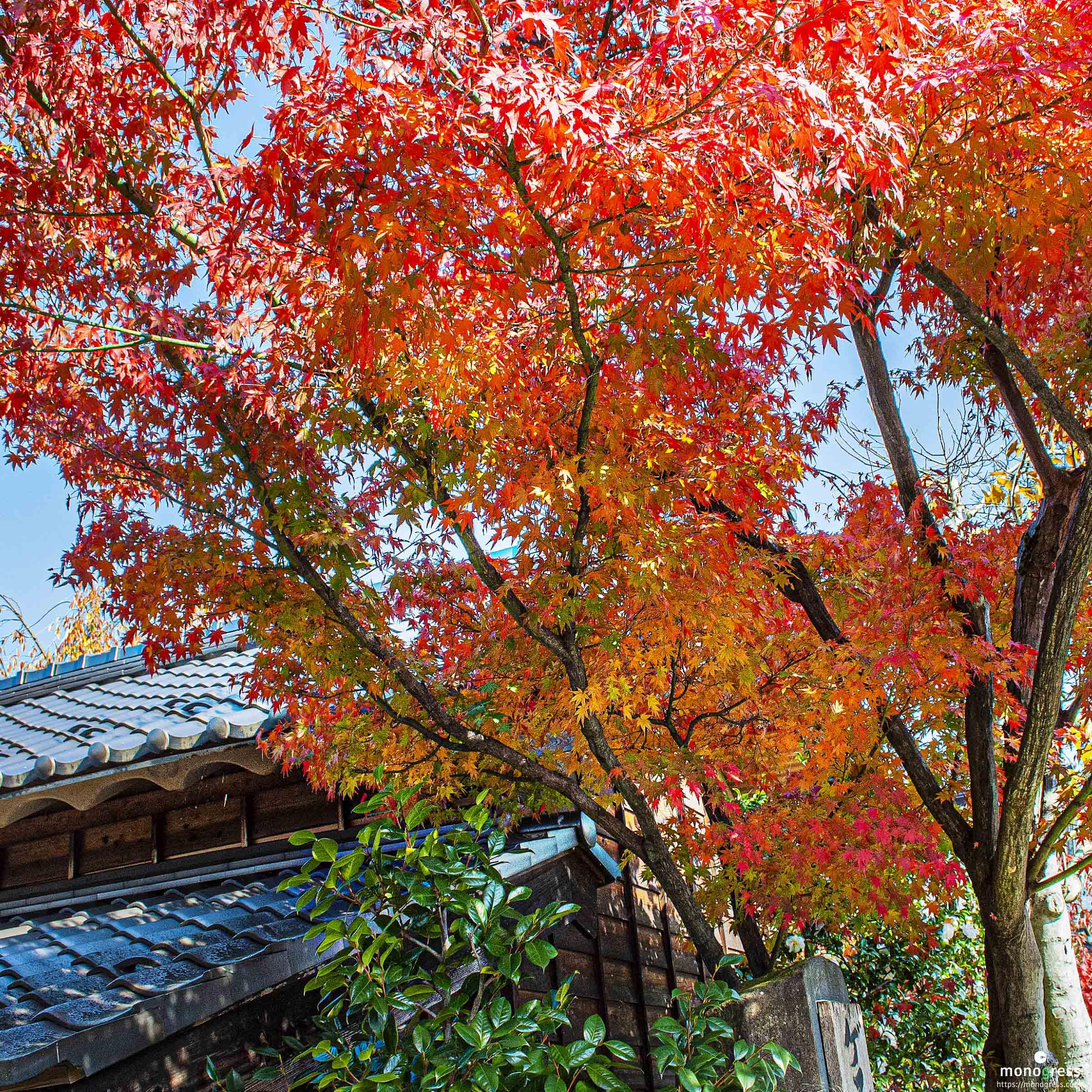 紅葉の映える秋の小布施
